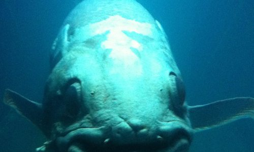下関の海響館の「夜の水族館」に行って来たよ